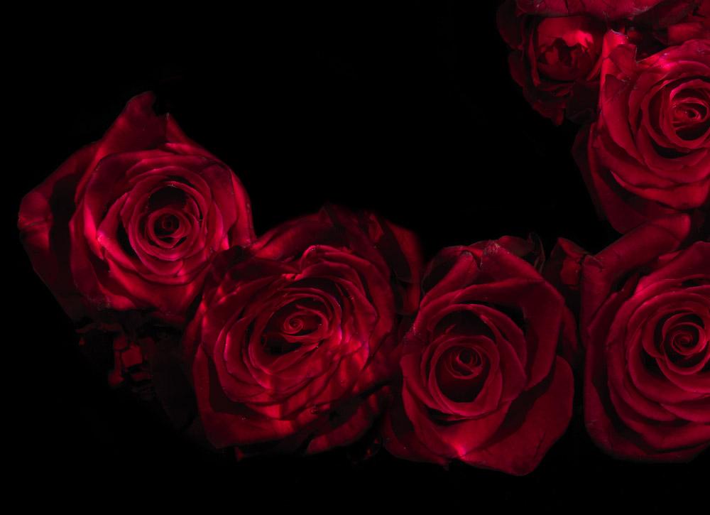 Rosae series