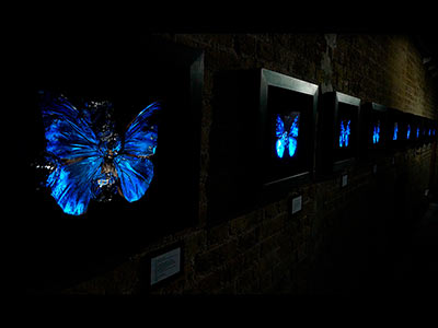 opening with Dellasposa Gallery to view key Flag, Butterfly, Photographic, Sculpture Painting and Illuminated artworks.