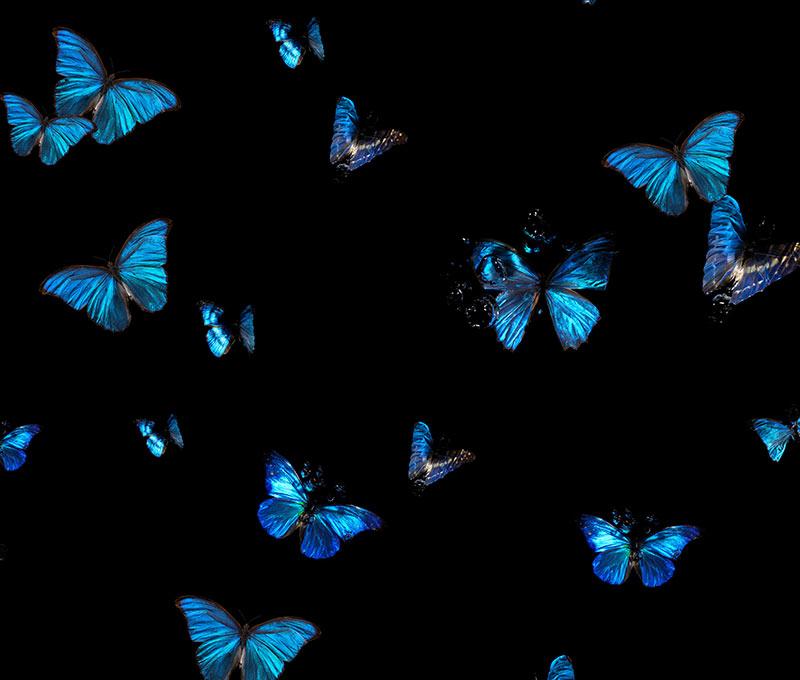 underwater butterfly wallpaper.