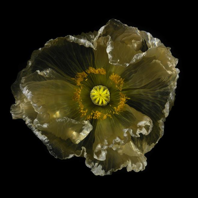 underwater glass flower unique photographic series chlorophyl