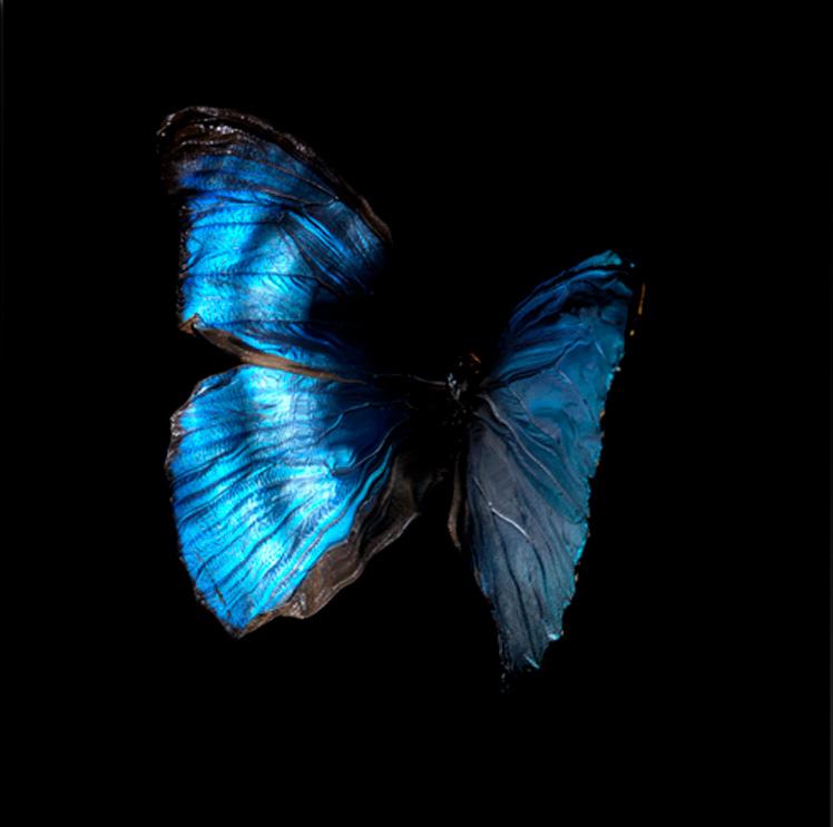 underwater under water artist alexander james hamilton signature butterfly series SWARM