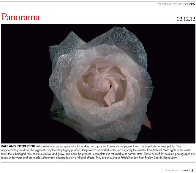 Sunday Telegraph feature surreal underwater glass like flower photography series that look like paintings