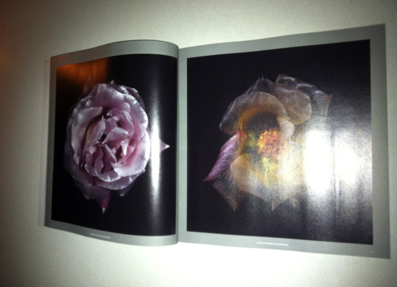 underwater glass roses fragile earth